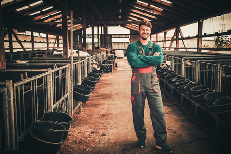Young farmer in a cowshed on a dairy farm