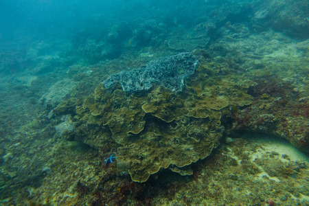 Underwater world in an ocean