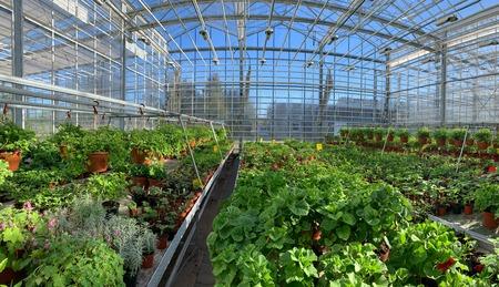 Interrior of a botanical greenhouse. Stok Fotoğraf - 119161790