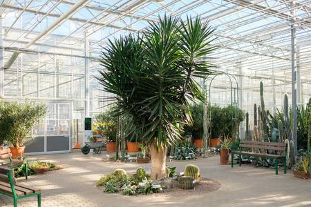 Interrior of a botanical greenhouse.