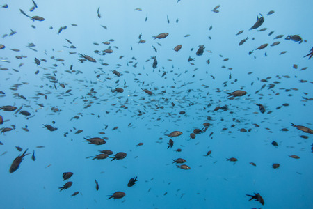 Fishes swimming in a mediterranean sea 写真素材