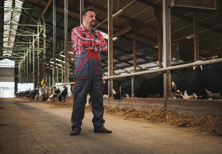Farmer in a cowshed on a dairy farm.