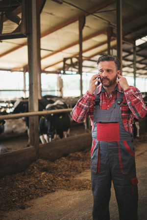 Farmer with a mobile phone in a cowshed on a dairy farm. 스톡 콘텐츠 - 131011163