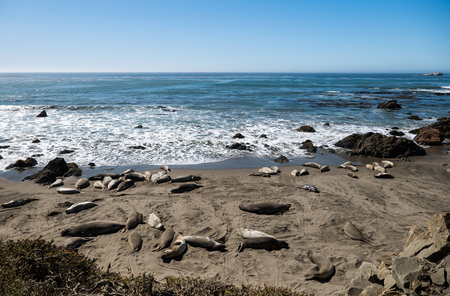 Sea lions resting on a Pacific Coast beach.