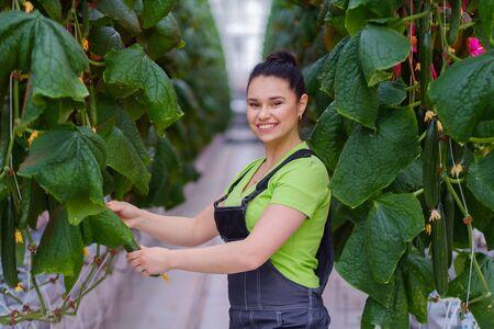 Woman working in a greenhouse Zdjęcie Seryjne