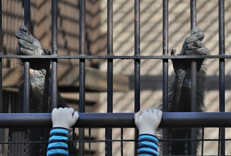 cage gorilla: Child and monkey hanging together.