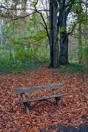 empty bench: Autumn scene with empty bench in the park