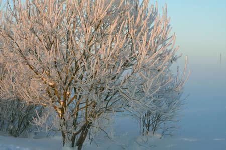 Winter landscape - frosty misty day