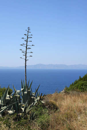 Mediterranean view with agave