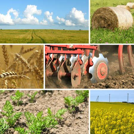 arando: Collage de agricultura Foto de archivo