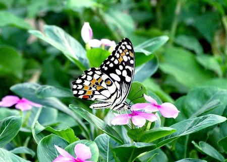 Beautiful butterfly newshot photo