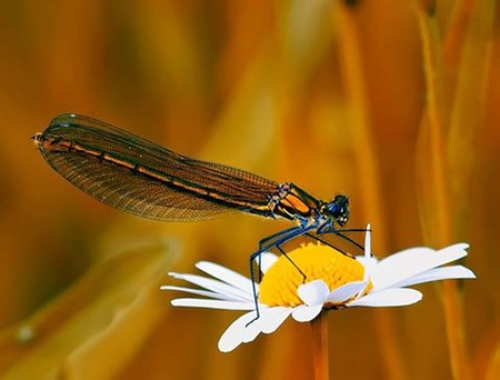 Nature experience Dragonfly photo