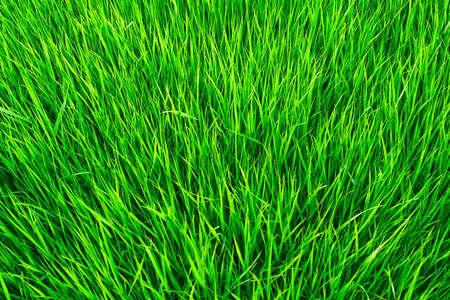 Grass formant un tapis de verts Banque d'images