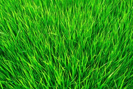 Grass forming a carpet of greens Stock Photo - 6670501