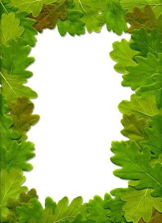 The frame of oak leaves photo