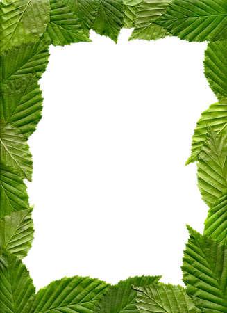 Le cadre des feuilles