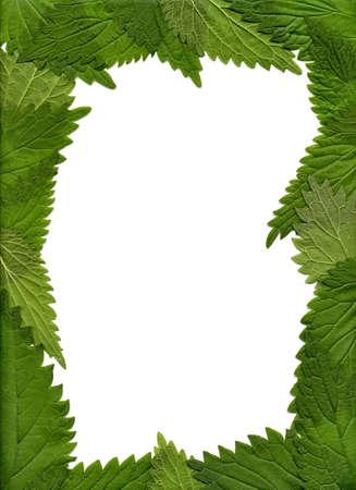 La trame des feuilles ortie Banque d'images