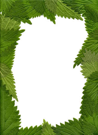The frame of the nettle leaves Stock Photo