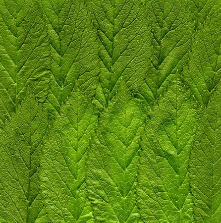 Nettle leaves. Background