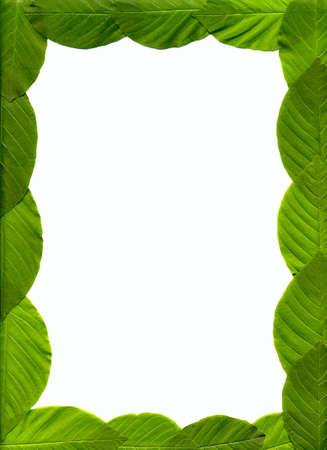 Le cadre de feuilles  Banque d'images