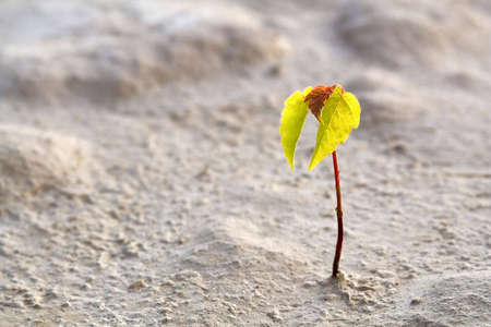 Small Rostock of a tree in desert Stock Photo