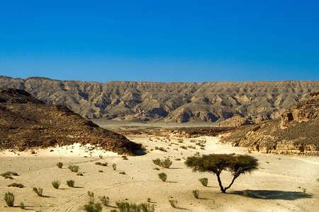 dry desert in red sea region, sinai, egypt Stock Photo