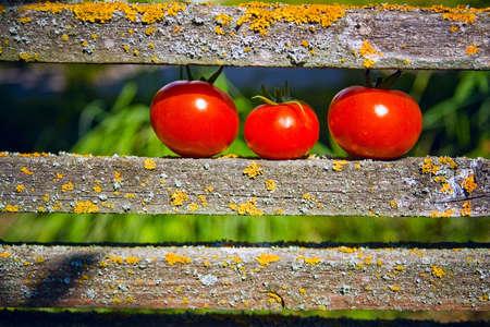 trois tomates m�res couch�e sur la plage  Banque d'images