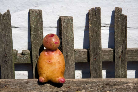 funny potato man on the fence