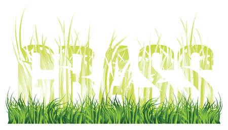 spring green grass Illustration