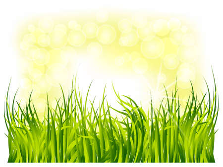 spring green grass on a background of solar flare
