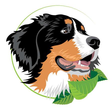 Berner Sennenhond met groene bladeren. Illustratie geschikt voor veterinaire klinieken en andere organisaties van fokkers.