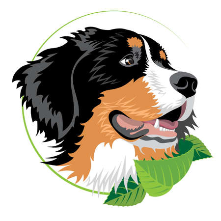 Perro de montaña bernés con hojas verdes. Ilustración para clínicas veterinarias y otras organizaciones de criadores.