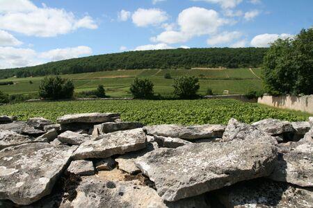 demarcation: Low wall in vineyards