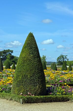 coniferous cut: french garden castle of Versailles (France) Stock Photo - 10588032