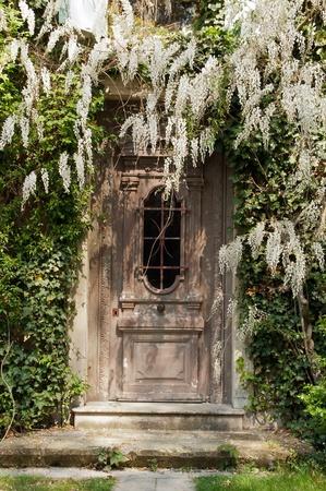 藤の古いドア 写真素材