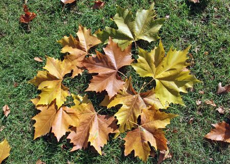 grouping:  grouping of leaves in autumn Stock Photo