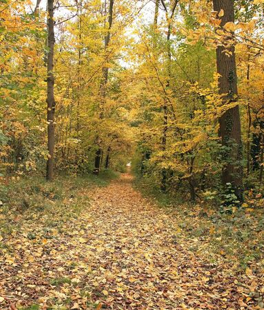 introspection: forest in autumn, an air of melancholy and introspection climate