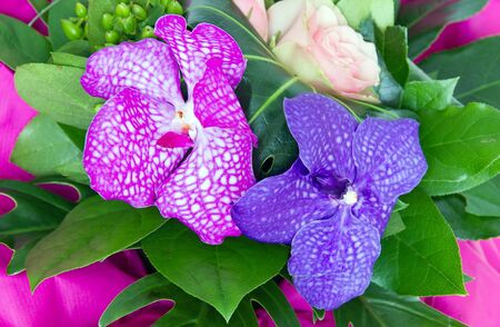 st valentin: bouquet of orchids, a present for a special occasion