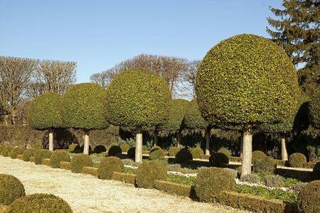 alley shrubs of boxwood, French garden near Paris  France Stock Photo - 12775401
