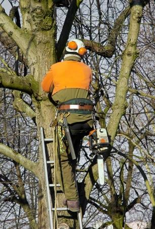 резка: обрезка крон деревьев, лесоруб сумма в дереве, чтобы сократить филиалы Фото со стока