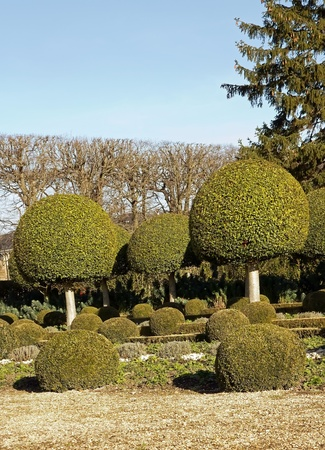 alley shrubs of boxwood, French garden near Paris  France  Stock Photo - 12763927