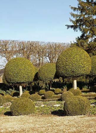 alley shrubs of boxwood, French garden near Paris  France Stock Photo - 12763927