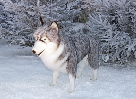 cuddly: Wolf in the snow  enormous cuddly toy for animation  Stock Photo