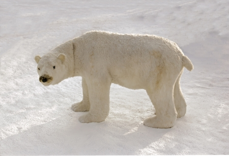 cuddly toy: Polar bear in the snow  enormous cuddly toy for animation