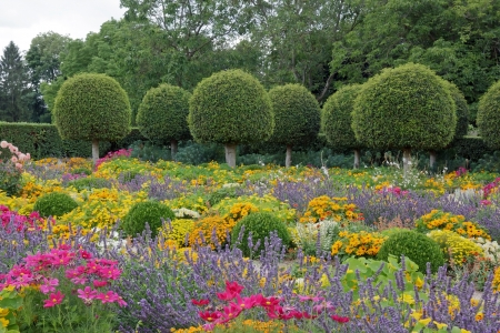 Formal garden, flowers and box tree cut in France Stock Photo - 17037860