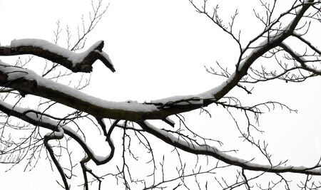 branches of tree under the snow Stock Photo - 17475521