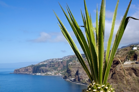Aloe in front of the Atlantic Ocean (Madeira) Stock Photo