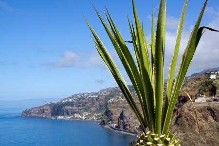 Aloe in front of the Atlantic Ocean (Madeira) Stock Photo