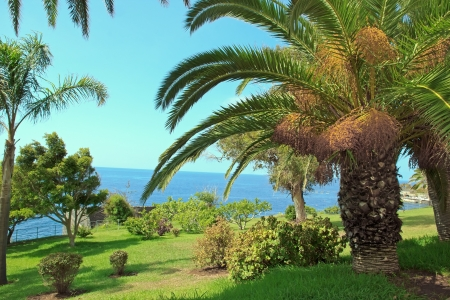Palm trees, the seaside Funchal, island of Madeira