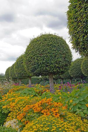 ballad: Formal garden, flowers and box tree cut Stock Photo